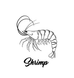 shrimp black ink sketch vector image