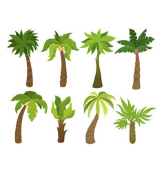 tropical palm trees set beach and nature concept vector image
