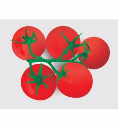 Vine tomato's vector