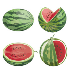 A set of pieces of watermelon a collection of vector
