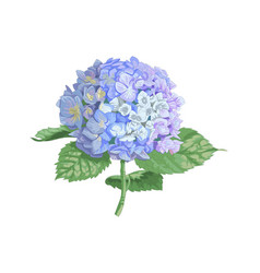 Highly detailed of hydrangea vector