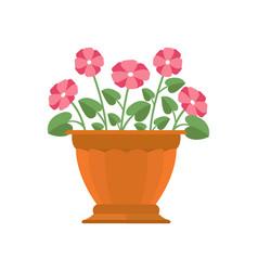 Periwinkle flower in pot vector