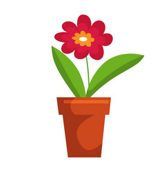 potted blossom flower bud isolated on white space vector image