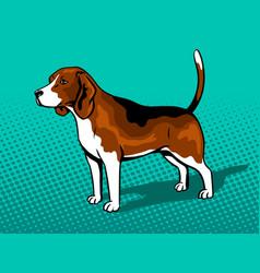 dog beagle pop art style vector image vector image