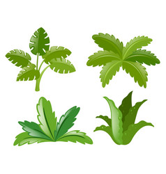 Four different kinds of plants vector