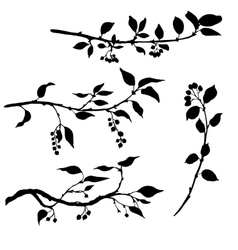 set tree branches with leaves and berries vector image