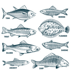 Sketch fishes trout and carp tuna and herring vector