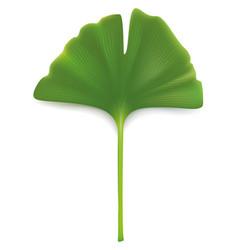 Ginkgo biloba leaf isolated on white vector