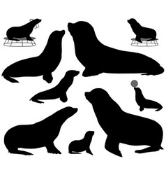 Collection of silhouettes of california sea lions vector