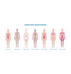 Female body biological infographic set flat vector