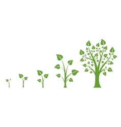 Tree growth diagram vector