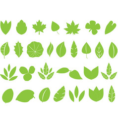 Green leafs vector image