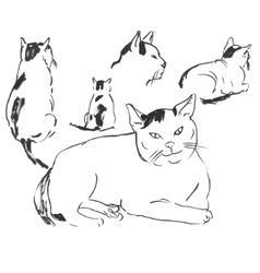 sketches of cats in different posesdoodles vector image