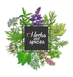 Green square design with spices and herbs vector