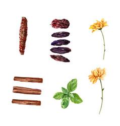Set watercolor calendula cinnamon background vector