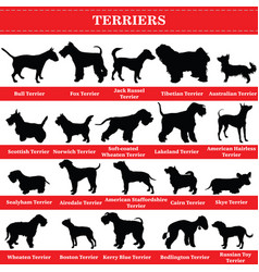 terriers silhouettes vector image