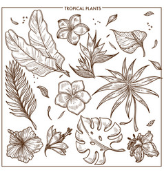 tropical plants and exotic flowers sketch vector image