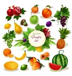 Organic fruit poster for food juice drink design vector image vector image
