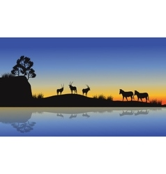 Antelope and zebra silhouette at morning vector