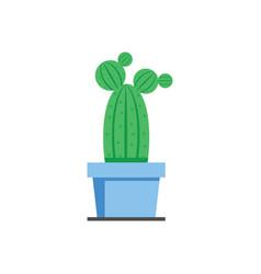 cactus plant vector image