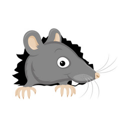 cute gray rat gnawed a hole vector image