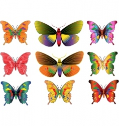 Set different multicolored butterflies vector