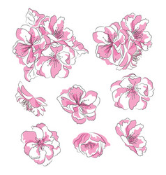 set of cherry blossoms collection of pink sakura vector image
