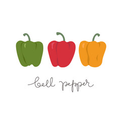 Set of red green yellow bell peppers paprika vector