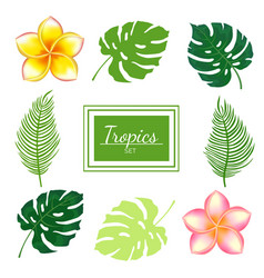 set tropical plants and flowers vector image