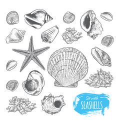 Set with seashells vector