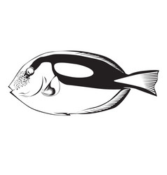 Black dory fish vector