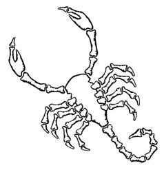 Scorpion silhouette vector