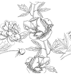 Seamless pattern black and white peonies vector image