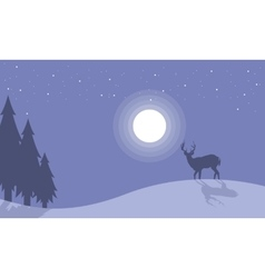 Silhouette of one reindeer at night scenery vector
