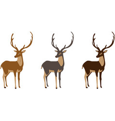 Three spectacular young deer with gorgeous antlers vector