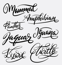 Mammal and amphibian hand written typography vector