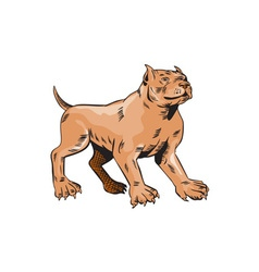 Pitbull Dog Mongrel Standing Etching vector image vector image