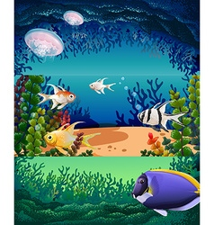 Fish swimming under the ocean vector image