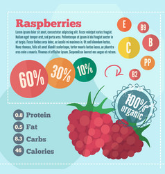 raspberry infographics in flat style vector image