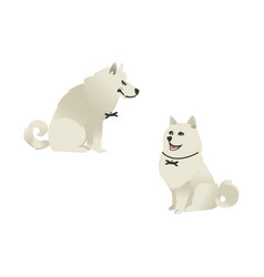 set of sitting white fluffy dogs with different vector image