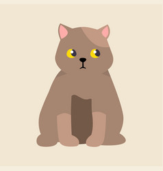 Cat breed british shorthair cute pet portrait vector