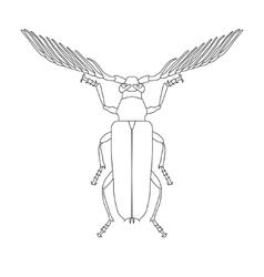 Skalbaggar beetle Cyriopalus wallacei Sketch of vector image vector image