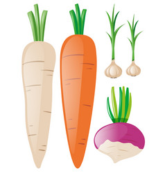 Carrots and garlic on white background vector
