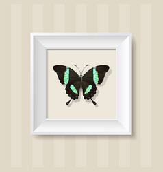 green butterfly in a white frame vector image