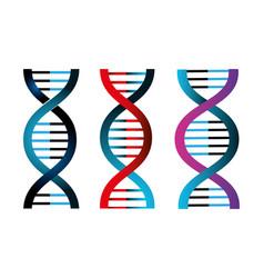 Set structures deoxyribonucleic acid vector