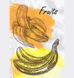 banana fruits vector image
