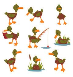 cute male mallard duck set cute funny duckling vector image