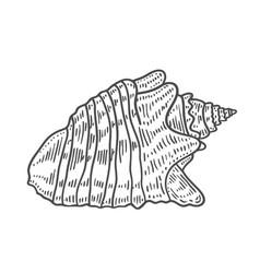 Engraving of spiral seashell vector