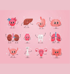 Funny anatomical mascot kidneys muscle tooth lungs vector