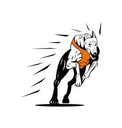 Greyhound Dog Racing Retro vector image